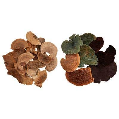Dried Sponge Mushroom