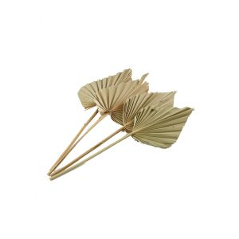 Dried Palmspear