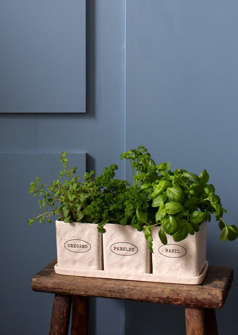 Shop Plantcessories