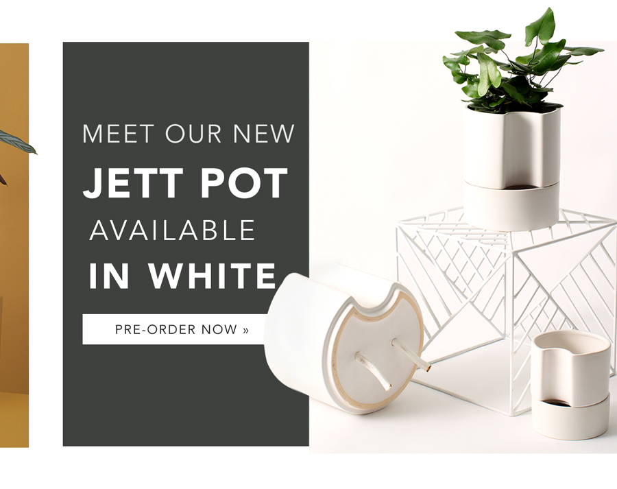 Meet our New Jett Pot in White | Pre-Order Now